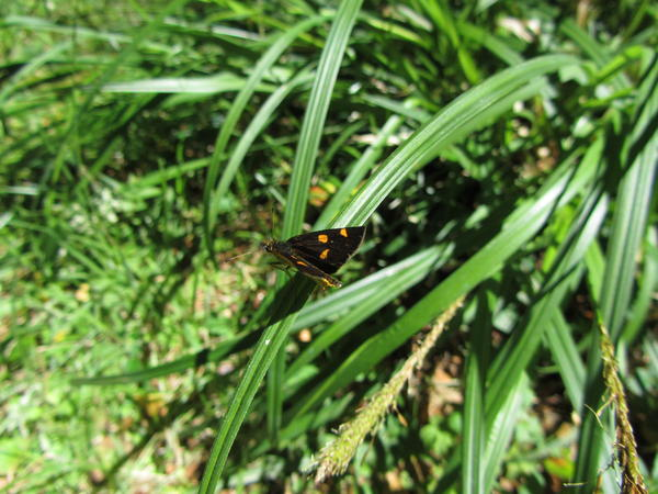 Posa mariposa