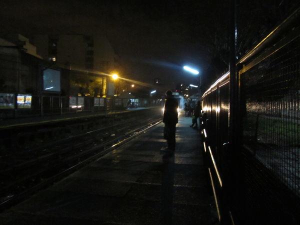 Drago de noche