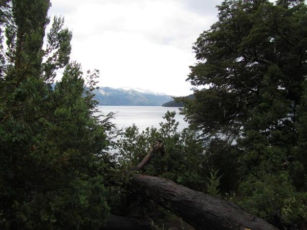 Bosque y Lago